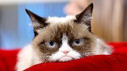 Murió Grumpy Cat, una de las gatas estrellas en Internet