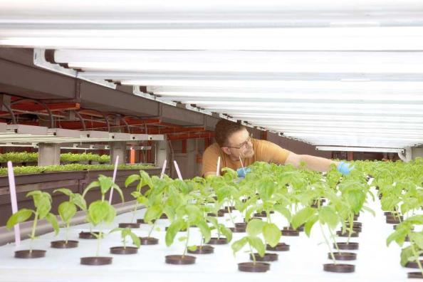 Cultivos verticales ganan espacio en estados unidos for Cultivos verticales definicion