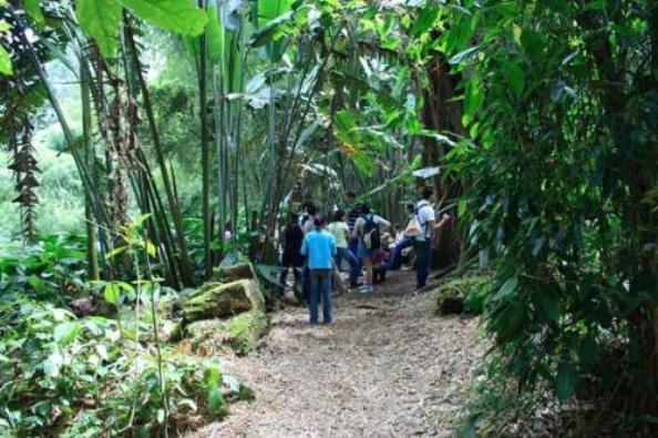 Realizar n curso de identificaci n de flora nativa en el for Jardin botanico cursos